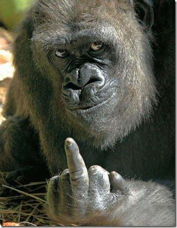 gorilla-finger