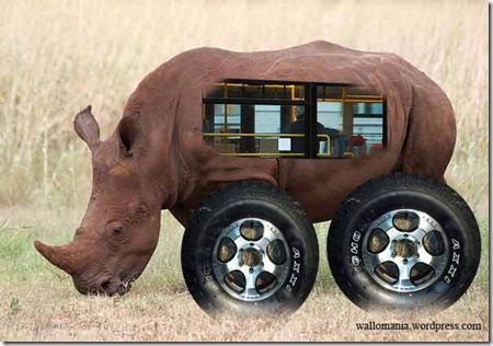 rhino bus